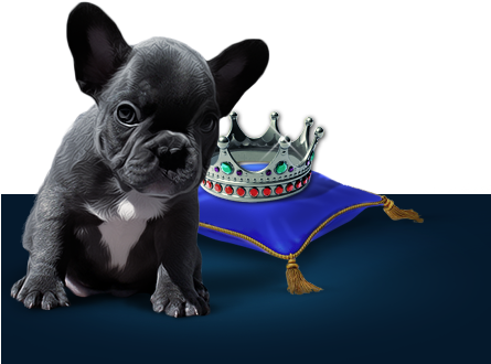 French Bulldog - Girl Who Wanted To Become A Princess, HD Png Download