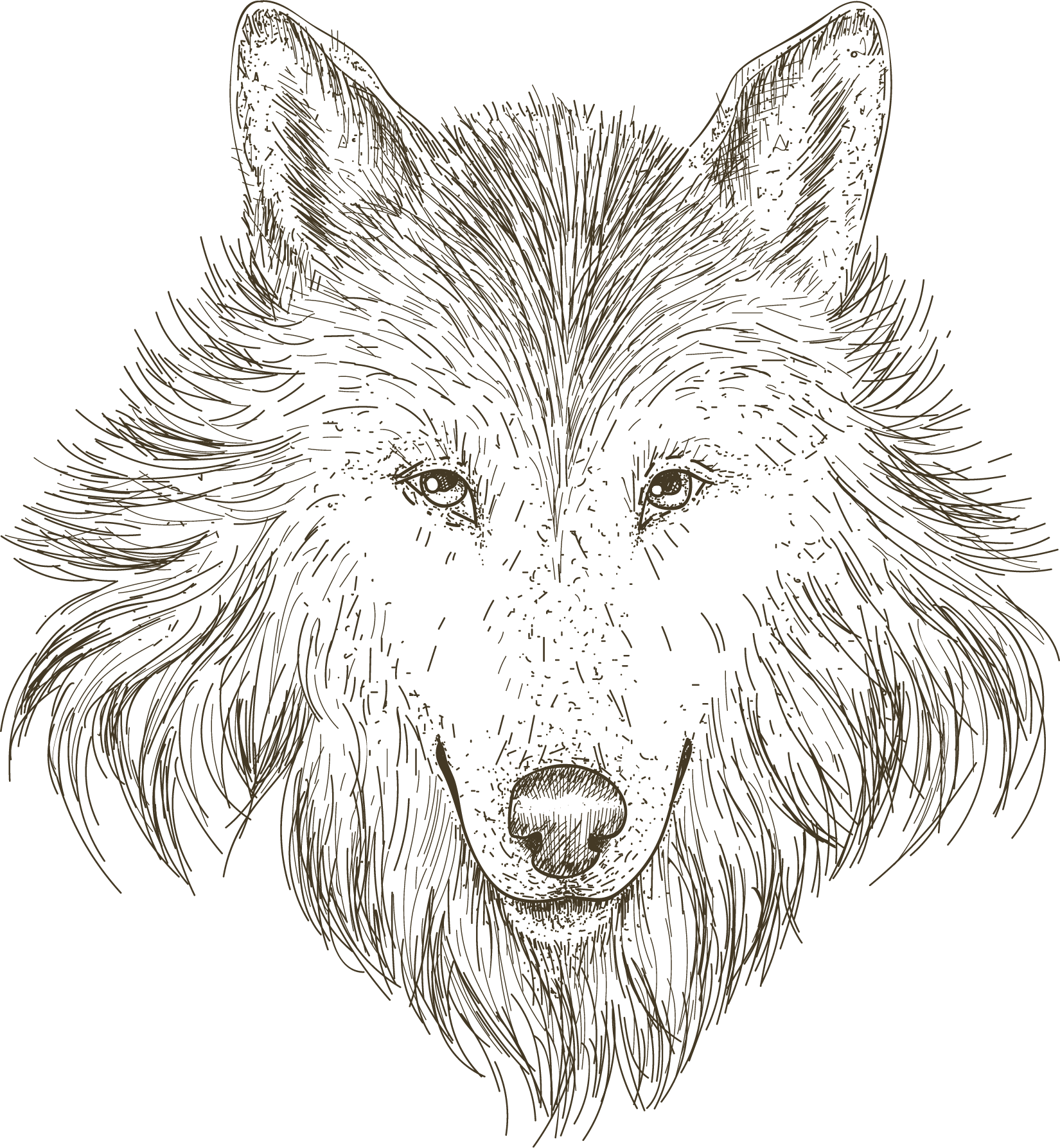 Wolf Drawing Drawing Of Wolf Transparent Transparent Png Original Size Png Image Pngjoy