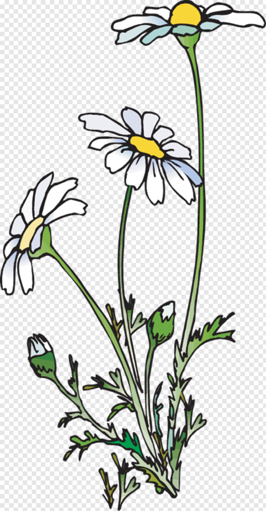 Beans - Daisies Clipart, Png Download