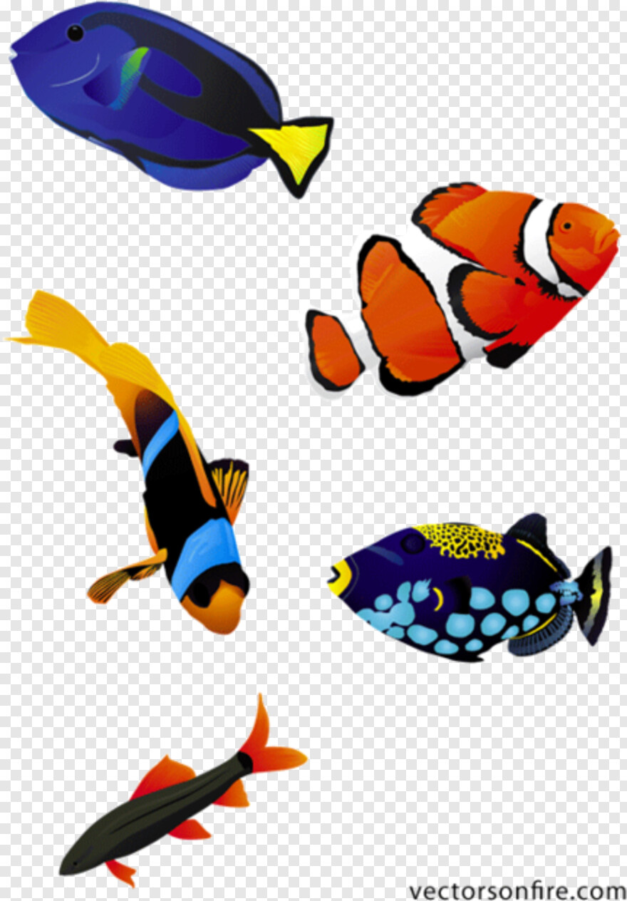 Tropical Fish - Coral Reef Fish Vector, Transparent Png