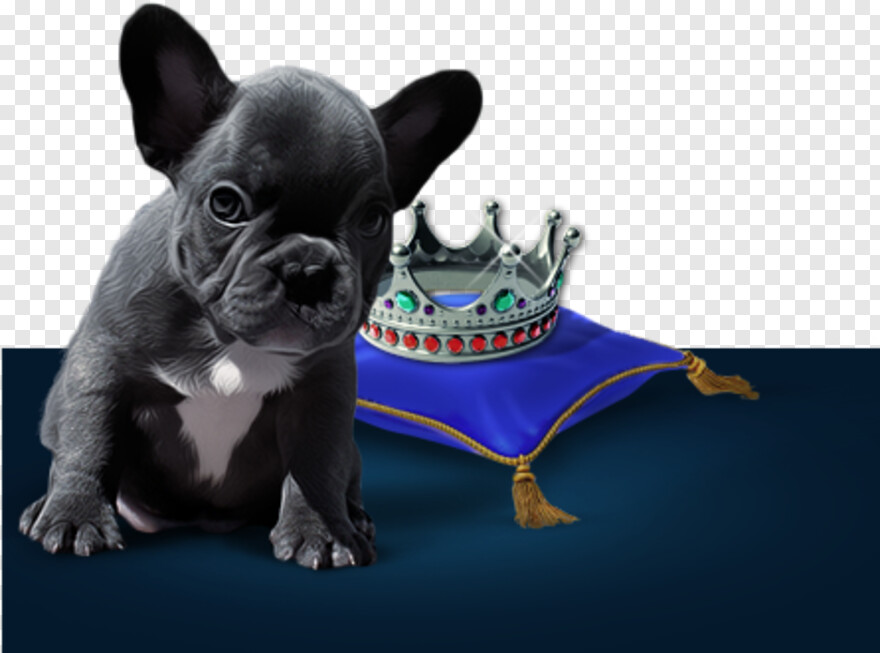 French Bulldog - Girl Who Wanted To Become A Princess, HD Png Download@pngjoy.com