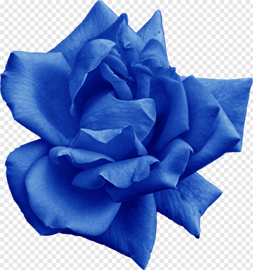 Rose - Blue Rose Png, HD Png Download