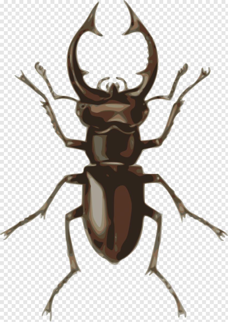 Beetle - How To Set Use Stag Beetle Clipart, HD Png Download