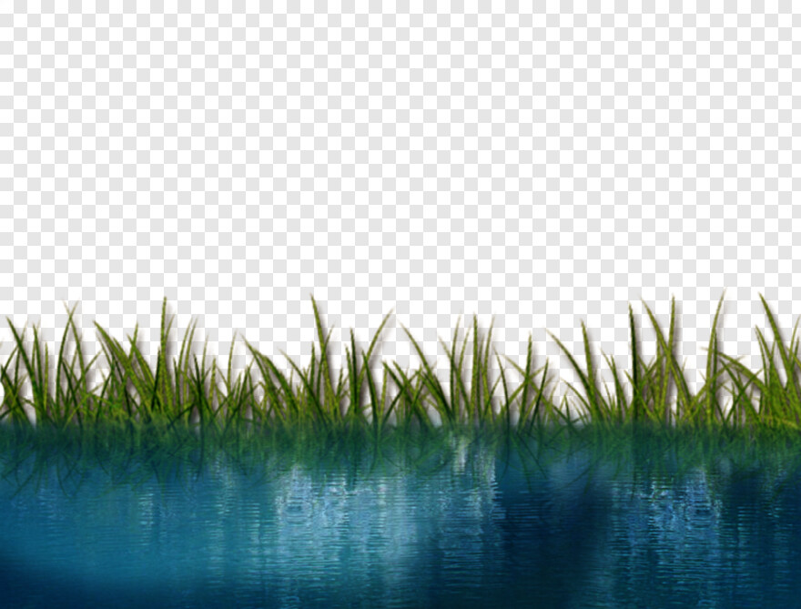 Water Clipart Riverside Reed Png Download 900x684 636783 Png Image Pngjoy