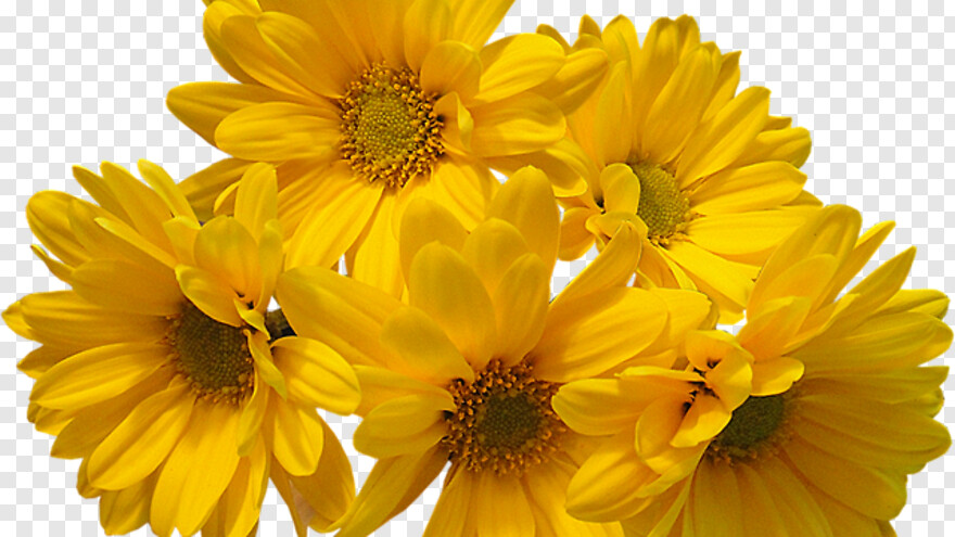 Aesthetic Yellow Flowers Aesthetic Png Hd Png Download 640x360 822082 Png Image Pngjoy