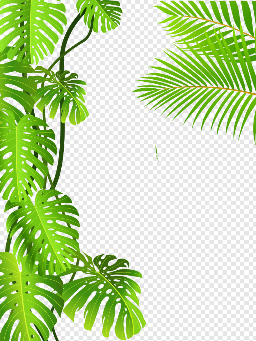 Idubbbz Tropical Rainforest Tropical Leaves Png Transparent Png 5877x6031 834959 Png Image Pngjoy 123 transparent png of tropical leaves. tropical rainforest tropical leaves png