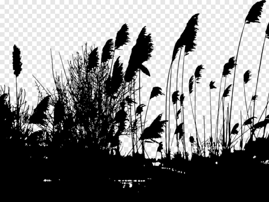 Seaweed Silhouette Reeds Silhouette Png Hd Png Download 640x480 7468699 Png Image Pngjoy