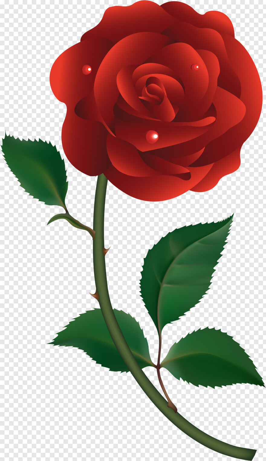 Flower Vector - Red Rose Vector Png, HD Png Download