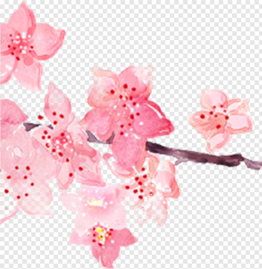 Cherry Blossom Petal - Watercolor Painting, Transparent Png