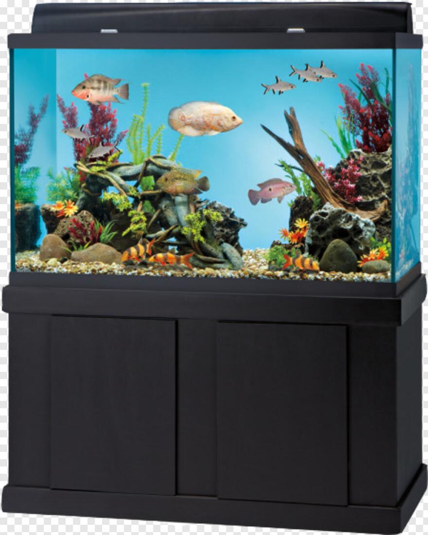 Petsmart Logo Fish Aquarium At Home Hd Png Download 600x600 10002434 Png Image Pngjoy