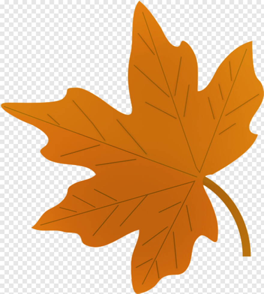 Pile Of Leaves Fall Leaves Drawing Png Hd Png Download 595x650 1989641 Png Image Pngjoy